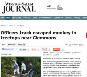 Officers track escaped monkey in treetops near Clemmons - Winston-Salem Journal  Local News  p, news, breaking, local, winston_salem-210158
